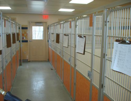Medical – USB Brookfield Animal Hospital 2008  3